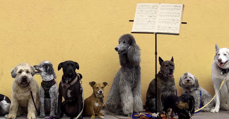 9. Concert for Dogs_©__NZF20_1200 x 628.jpg